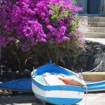 Eka på Pantelleria. Siciliens örike.